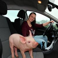 Luna-og-gris-i-bil